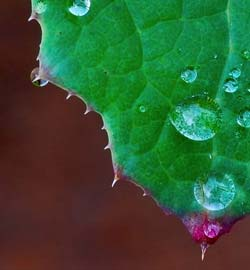 Dew on a Leaf